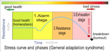 Stress curve and phases 3
