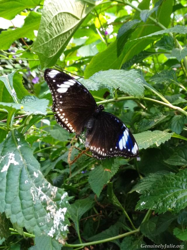 Butterfly conservatory 2016